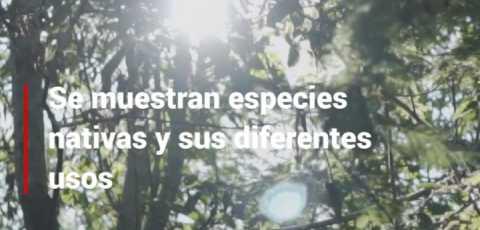 Snack Video 9 - Ecoturismo y sus diferentes formas para preservar la fauna y flora