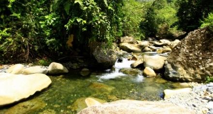 Ecuador: Campaña para salvar el Chocó, uno de los ecosistemas más amenazados