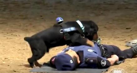 Un perro le hizo RCP a un policía en Madrid y le salvó la vida