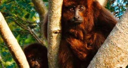 El 24% de las especies de mamíferos argentinos se encuentra amenazada