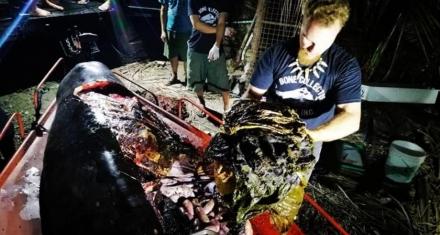 Filipinas: Otra ballena muerta con 40 kilos de plástico en el estómago