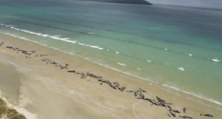 El hecho ocurrió este fin de semana en la isla Steward, en el extremo sur del país oceánico.