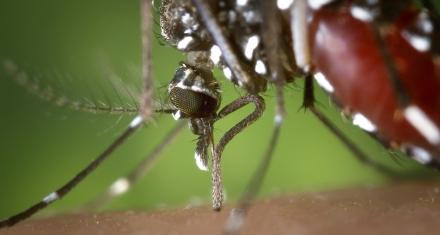 Descubren un insecticida natural y más potente que los sintéticos