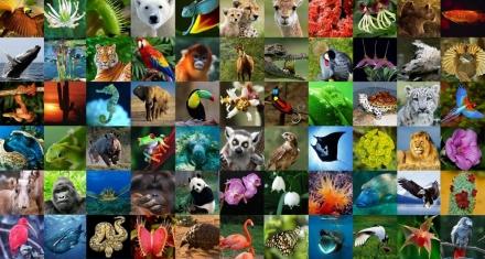 La pérdida de la biodiversidad aumenta el riesgo de transmisión de enfermedades infecciosas