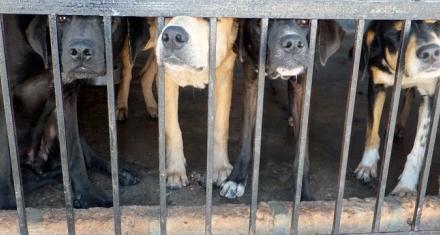 China: Prohíben criar perros para su consumo humano