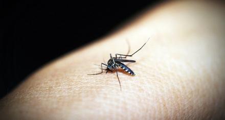 Misiones: Detectan nueva cepa de dengue y temen que aumenten los casos graves