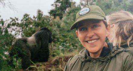 Ellen Degeneres financia a los gorilas de Ruanda