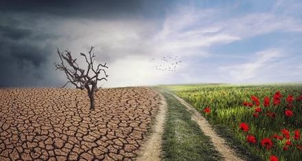 Denuncia contra YouTube: Sostienen que promueve la desinformación climática con sus algoritmo