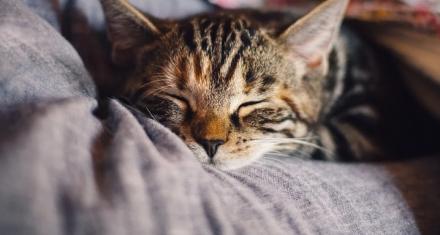 España: Detectaron el primer caso de un gato infectado