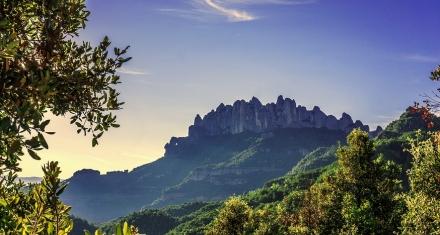 A pesar de aumentar en tamaño el Bosque Mediterráneo sufre más el cambio climático