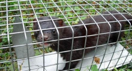 California: Prohíben circos con animales y los abrigos de pieles