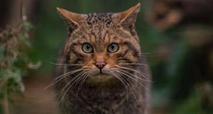 Quarter of UK mammals under threat of extinction