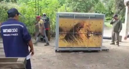 Llegaron las cajas que trasladarán a los 5 felinos del zoo de Santiago del Estero