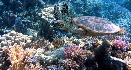 Puerto Rico: Una medida declararía a los arrecifes de coral como estructuras escenciales para proteger las costas