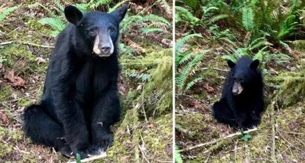 Estados Unidos: Sacrifican a una cría de oso negro por ser demasiado sociable con los humanos