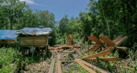 Santuario de orangutanes amenazado por la tala ilegal