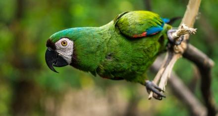 Ecuador en lucha contra el tráfico de vida silvestre