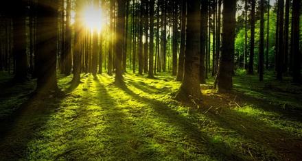 Si la temperatura global aumenta los bosques tropicales dejarían de almacenar carbono