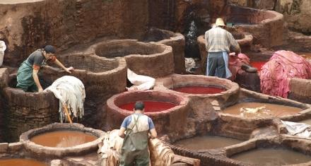 La producción de cuero a partir de hongos es posible, sostenible y renovable