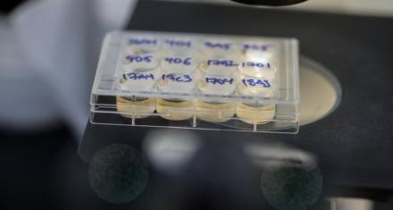 Estudio israelí propone a las bacterias como claves para la cura del COVID-19