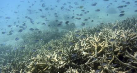 Las olas de calor marinas aumentaron un 50% en un siglo