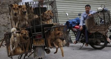 China: Animalistas piden fin del festival anual de carne de perro