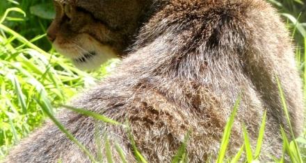 UK: More than a quarter of mammals face extinction