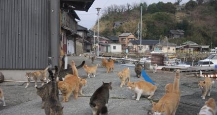 Japón: Misteriosos envenenamientos en una