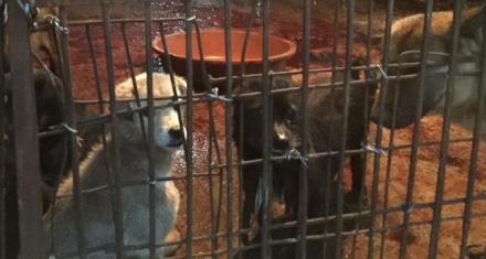 China: Vuelven a celebrar el festival de la carne de perro en Yulin