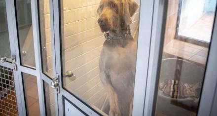 Alemania: Prohíben adopción de mascotas para la Navidad