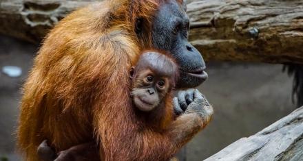 Indonesia: El trágico balance de los incendios que son igual o peor que en la Amazonia