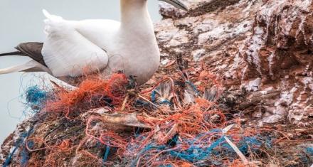 Aves marinas con plástico en sus intestinos