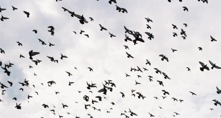 Desaparecieron 2.900 millones de aves en Norteamérica en medio siglo