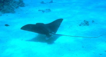 SOS para salvar a los tiburones y rayas del Mediterráneo