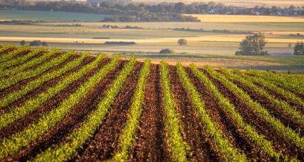 Los precios de los alimentos se mantendrían bajo si se aumenta la productividad en la próxima década