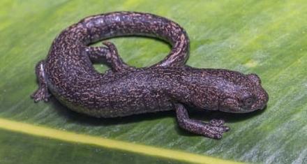 Colombia: Hallan dos nuevas especies de ranas en un área protegida en Colombia