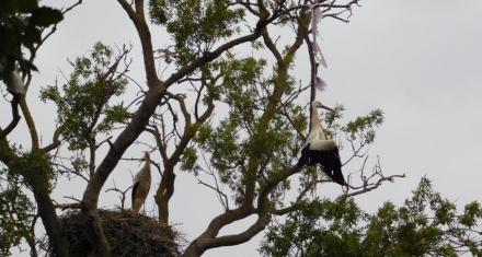 Cigüeña muere ahogada por una bolsa de plástico en un parque natural