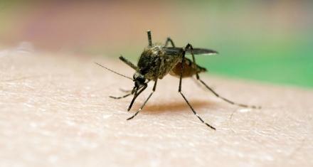 25 de abril: Día Mundial del Paludismo