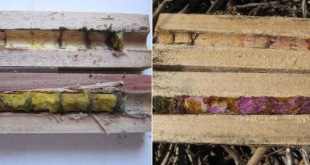 San Luis: Primer nido de abejas construido por desechos plásticos