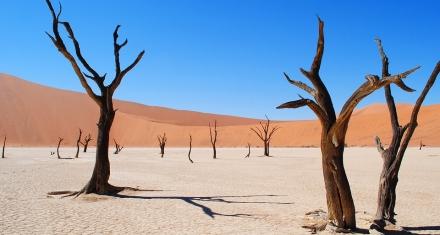 El sur de África está atravesando una crisis alimentaria de proporciones