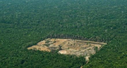 En un año la selva amazónica perdió una superficie equivalente a Madrid