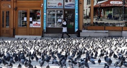 Las palomas se adueñan de las ciudades vacías