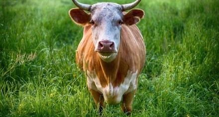 El Parlamento Europeo se niega a que se financien las corridas de toros con fondos agrarios europeos