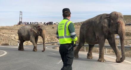 Volcó un camión que transportaba elefantes al sur de España