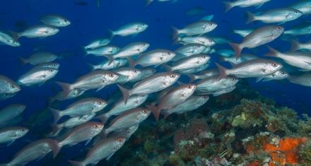 Hacia finales de siglo, el declive de la biodiversidad marina tropical empeorará notablemente