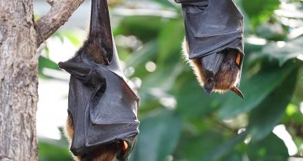 Un virus 96% parecido al coronavirus fue hallado hace 8 años en una mina llena de murciélagos en China