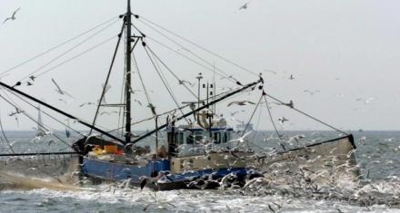 Europa prohíbe la pesca eléctrica