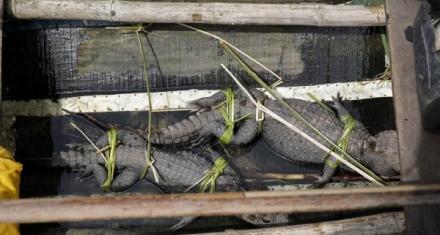 Alerta de la ONU sobre el peligro del tráfico ilegal de especies para la salud humana