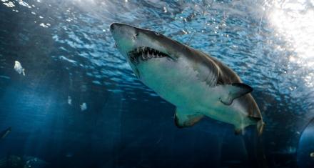 Colombia: se prohíbe la pesca artesanal e industrial de tiburón
