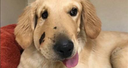 """El perro que le salvó la vida a su """"dueña"""""""